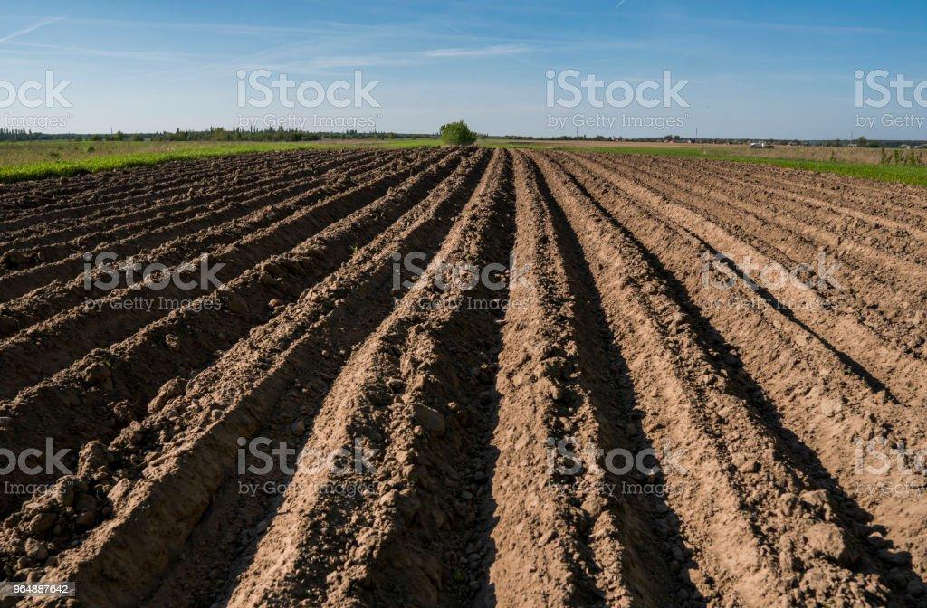 耕地耕地。風景與農地, 最近耕種了和準備為莊稼在晴朗的天以藍天。農業。 - 免版稅五月圖庫照片