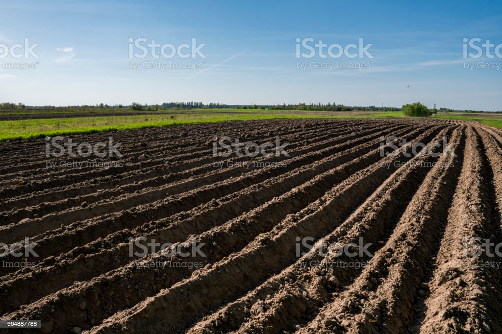 Plowed agricultural field. Landscape with agricultural land, recently plowed and prepared for the crop in sunny day with blue sky. Agriculture. royalty-free stock photo