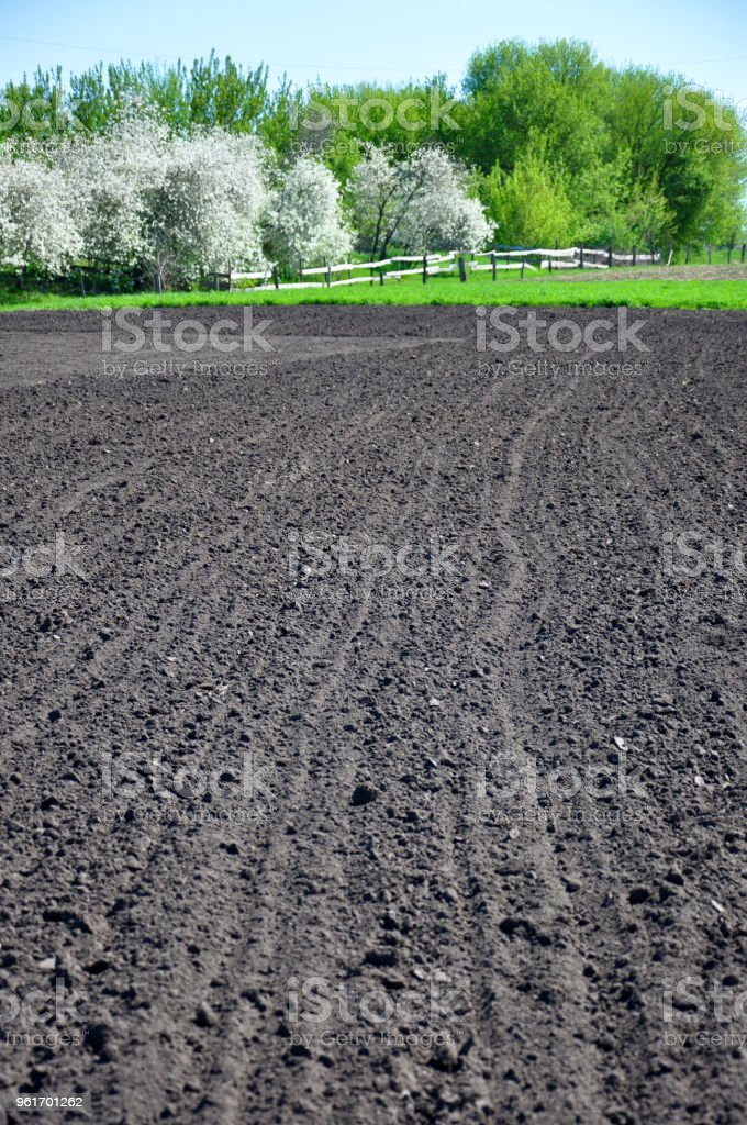 plowed black soil and spring trees around stock photo