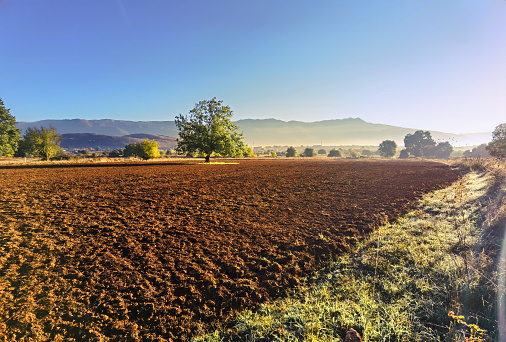 plowed field and a tree in autumn season in the morning