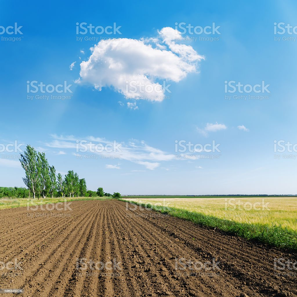 plowed field in spring and white cloud in blue sky royalty-free stock photo