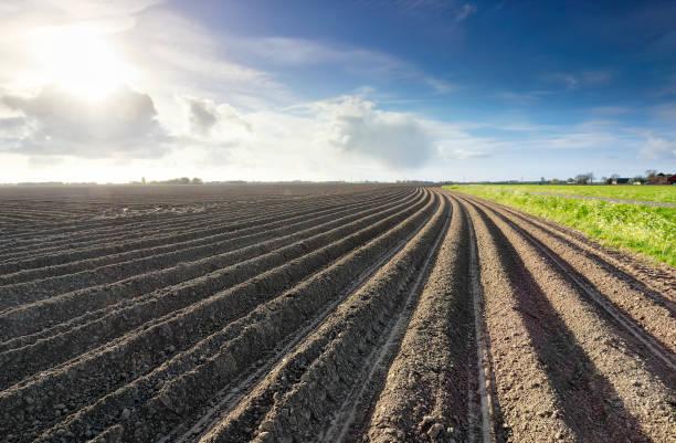 geploegd aardappel veld in de lente in Sunshine, Nederland foto