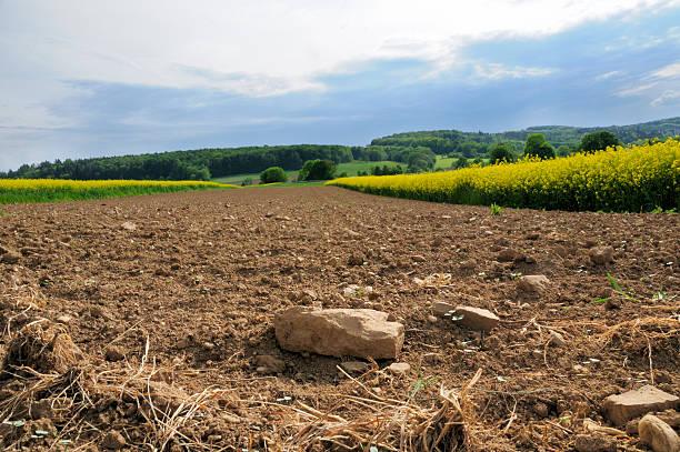 Plowed rocky farmland stony soil between canola fields stock photo