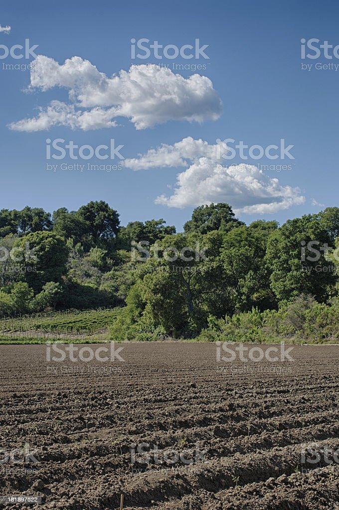 Plowed Rows of Fertile Organic Soil royalty-free stock photo