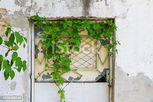 metal door in a white concrete wall with ivy