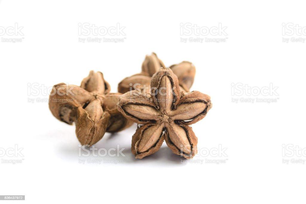 Plukenetia volubilis, sacha peanut, or sacha inchi on white background, herb and nature stock photo