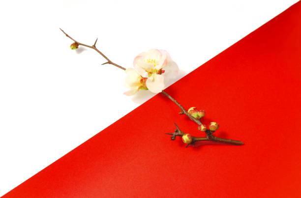 赤と白の背景を持つ梅の花 - 新年 ストックフォトと画像