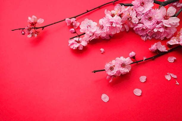 Plum Flowers or Cherry Blossom stock photo