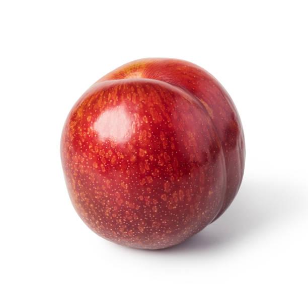 plum fruit stock photo