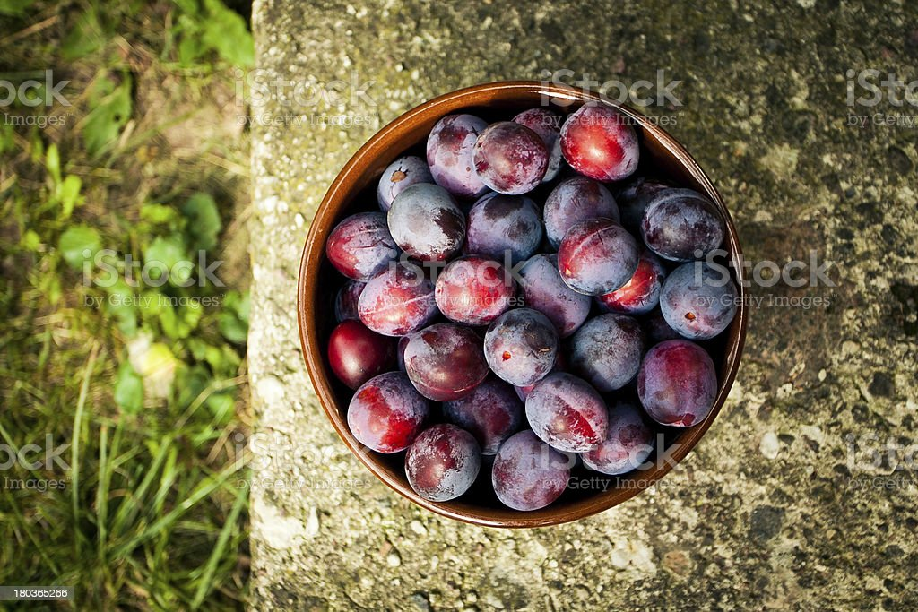 Plum in a bow royalty-free stock photo