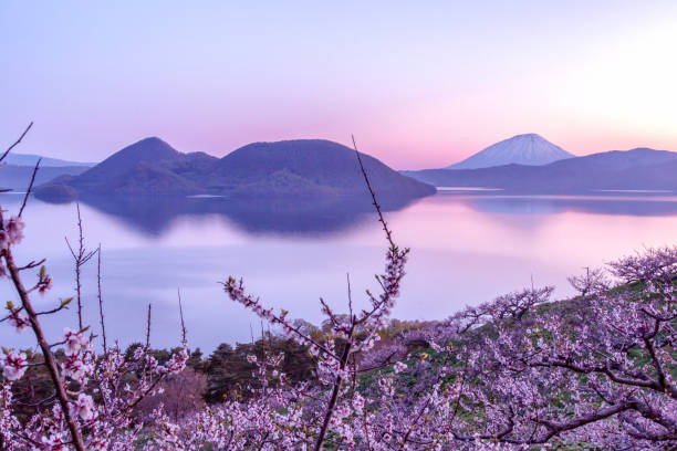 Plum trees and Lake Toya and Mt.Yotei stock photo