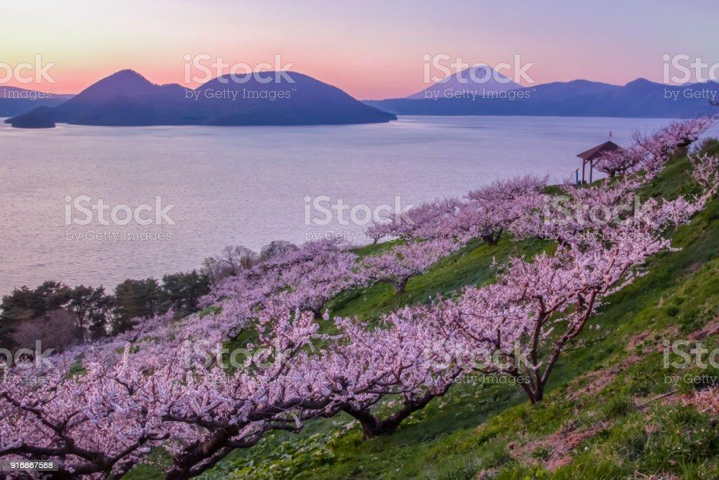 Plum trees and Lake Toya and Mt.Yotei royalty-free stock photo