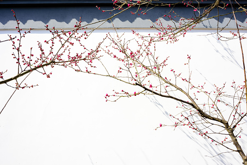 plum trees and shadow on the wall