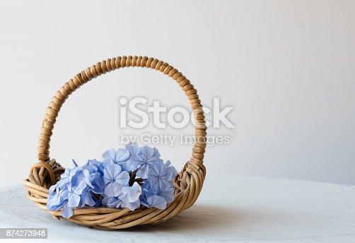 istock Plumbago in wicker basket 874273948