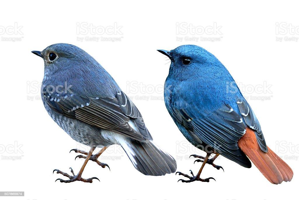 Kanialuk wody Pleszka zarówno Kobieta i mężczyzna niebieski ptak – zdjęcie