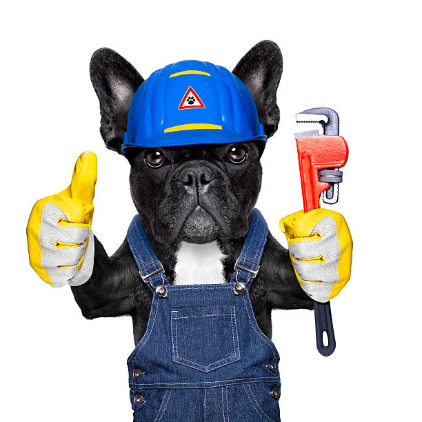 plumber dog with plunger - hundezubehör diy stock-fotos und bilder