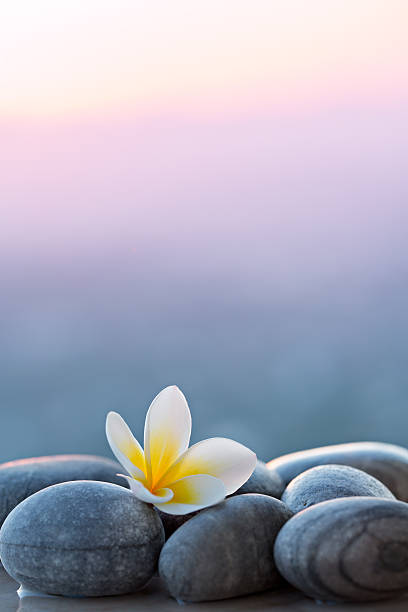 Plumeria flower and stones for spa background stock photo