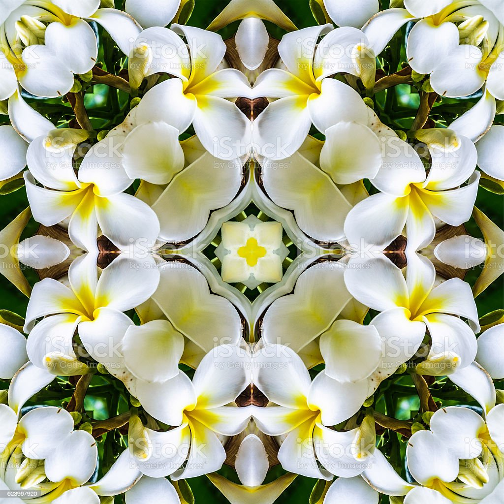 Plumeria Flower Mandala stock photo