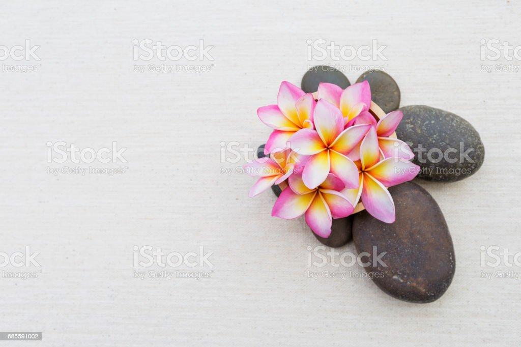 Plumeria flower on brown stone royalty-free 스톡 사진