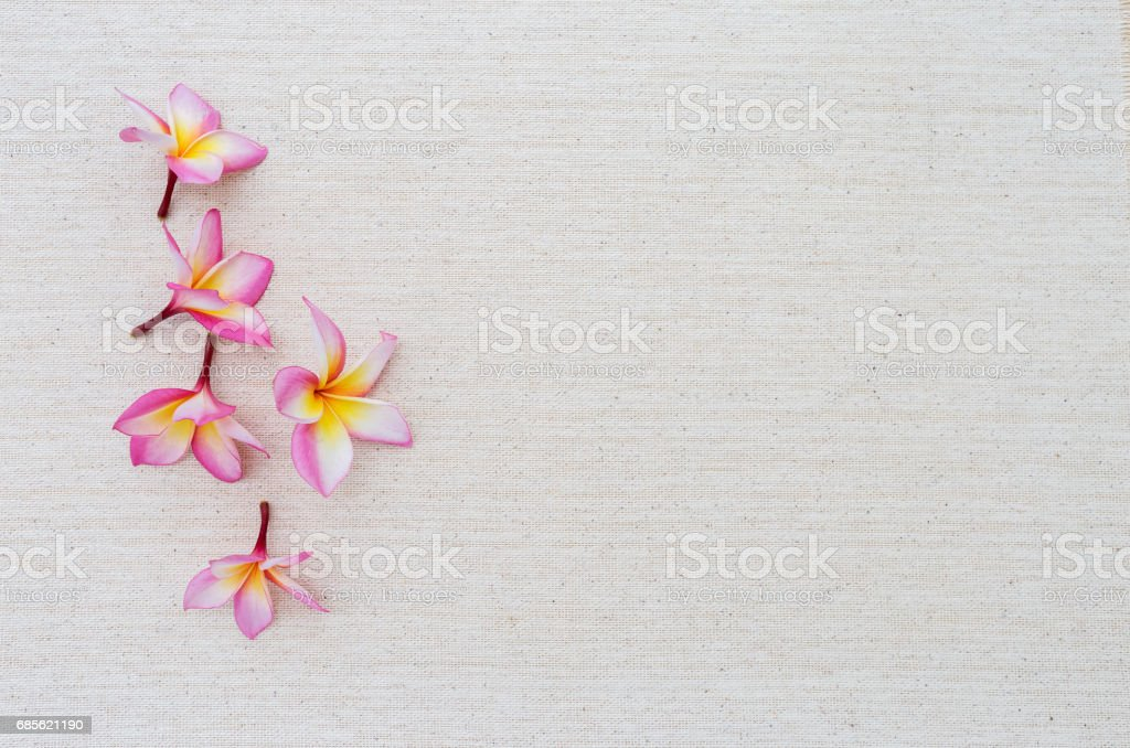 Plumeria flower on canvase background Lizenzfreies stock-foto