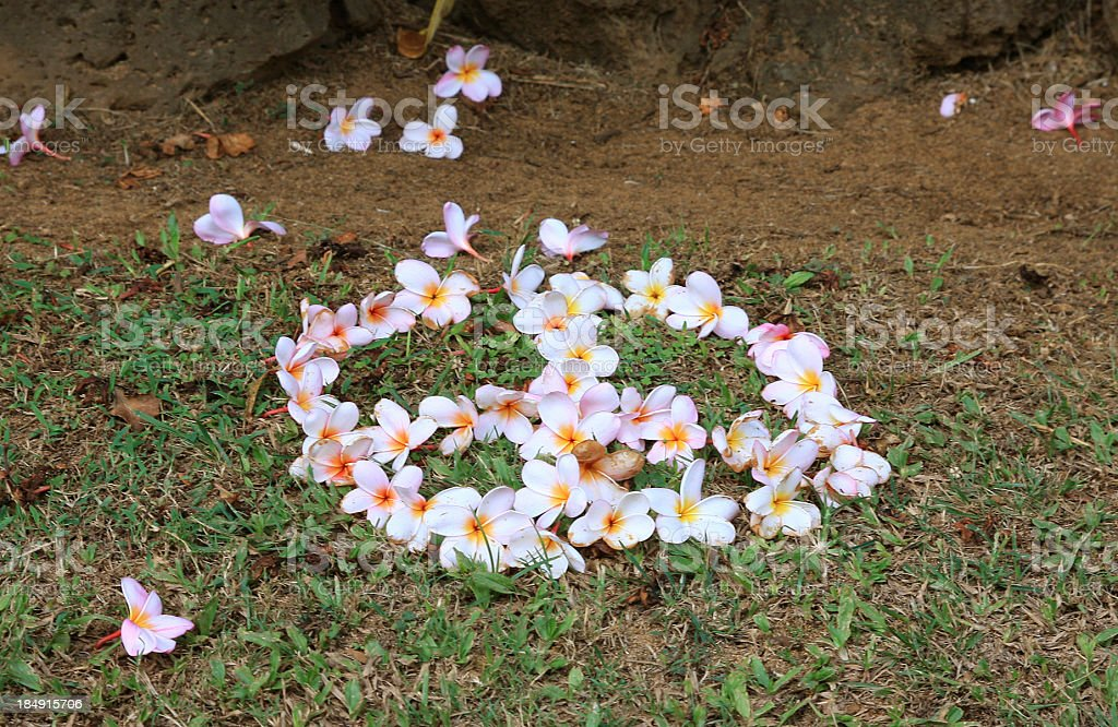 Plumeria flower peace sign on Kauai Hawaii stock photo