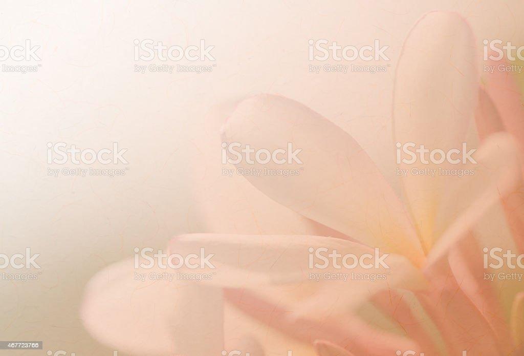 Fondo de flores de Plumeria suave - foto de stock