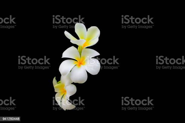 Plumeria flower white yellow beautiful isolated on black background picture id941250448?b=1&k=6&m=941250448&s=612x612&h=bmoxfqxr17v2vxtto80bhktdtsjgl1payagfnj3igs4=