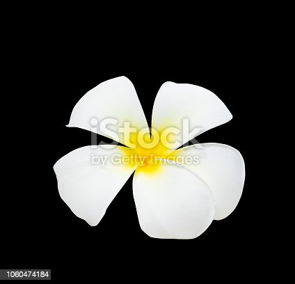 909806032istockphoto Plumeria flower yellow isolated on black background and clipping path ( Common name pocynaceae, Frangipani , Pagoda tree, Temple tree ) 1060474184