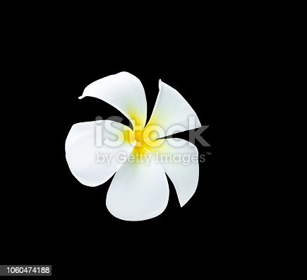 909806032istockphoto Plumeria flower yellow isolated on black background and clipping path ( Common name pocynaceae, Frangipani , Pagoda tree, Temple tree ) 1060474188