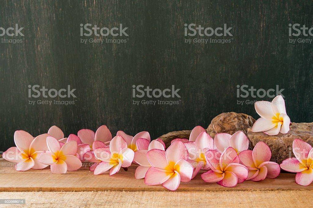 plumeria with chalkboard background stock photo