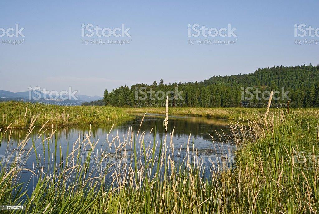Plummer Creek Marsh royalty-free stock photo