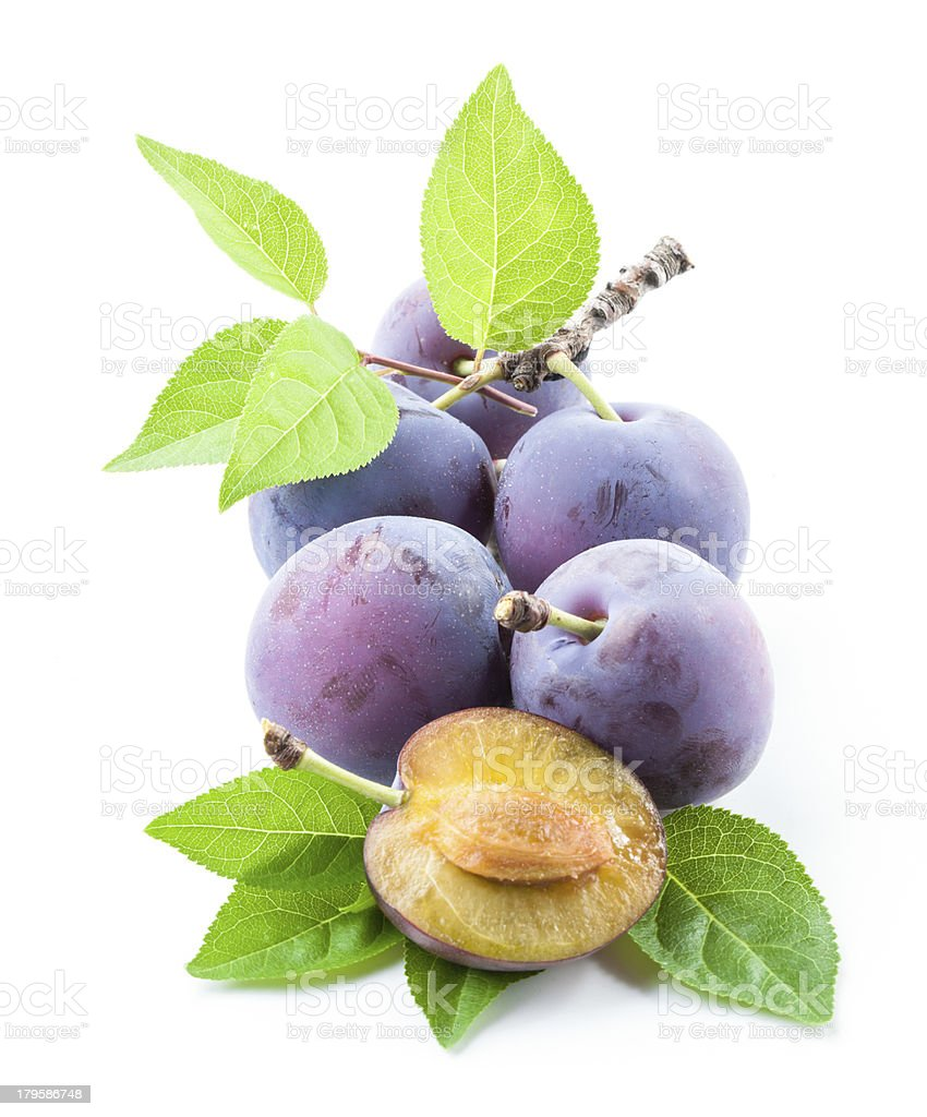 Plums. Branch with leaves isolated on a white background stock photo