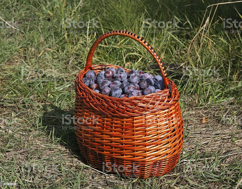 Plums in the basket royalty-free stock photo