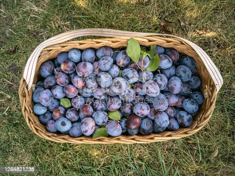 Reed basket full of plums.