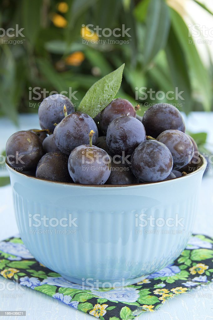 Plums royalty-free stock photo