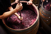 Winery workers treading red wine