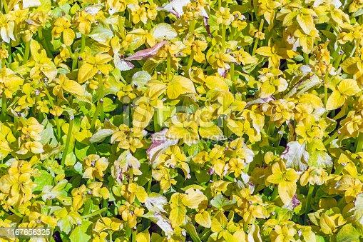 Plural motley varicoloured grass background