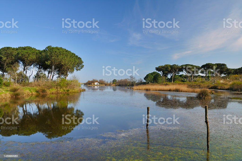 Po River Delta Park (Italy) stock photo