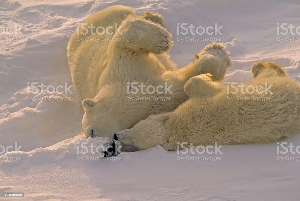 Poar bear and cub stock photo