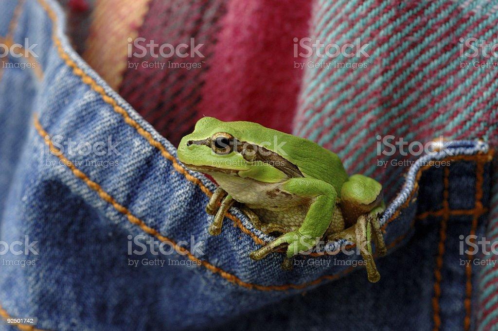 Pocket frog. royalty-free stock photo