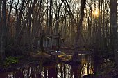 Pocomoke River Wood Duck Nest Boxes