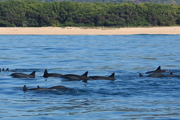 Pod of Dolphins – Foto