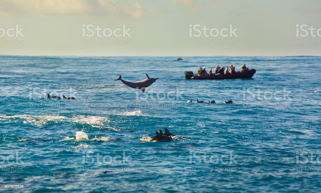 Pod of Spinner Dolphins in Na Pali Coast of Kauai, Hawaii stock photo