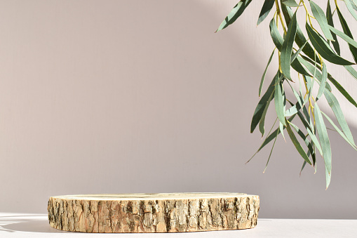 Podium for product presentation. A minimalistic scene of a felled tree with a branch of greenery with natural shadows.