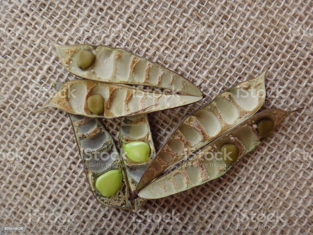 Pods and seeds of flamboyant tree stock photo