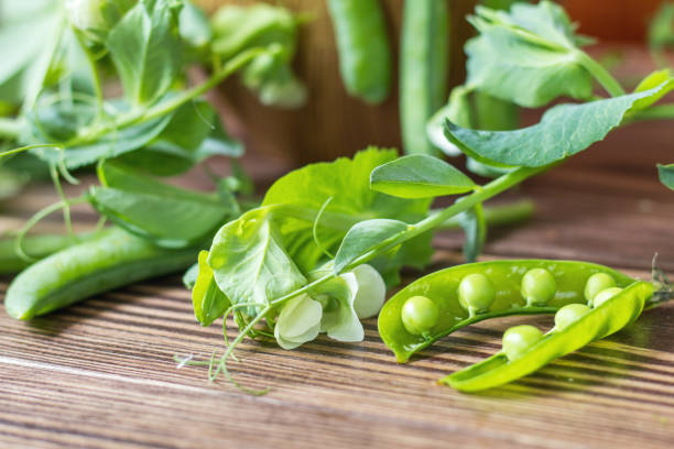 Pods of green peas and pea on dark wooden surface stock photo