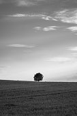 Poetic black and white image of a single, round tree as a point on the horizon in the evening light.