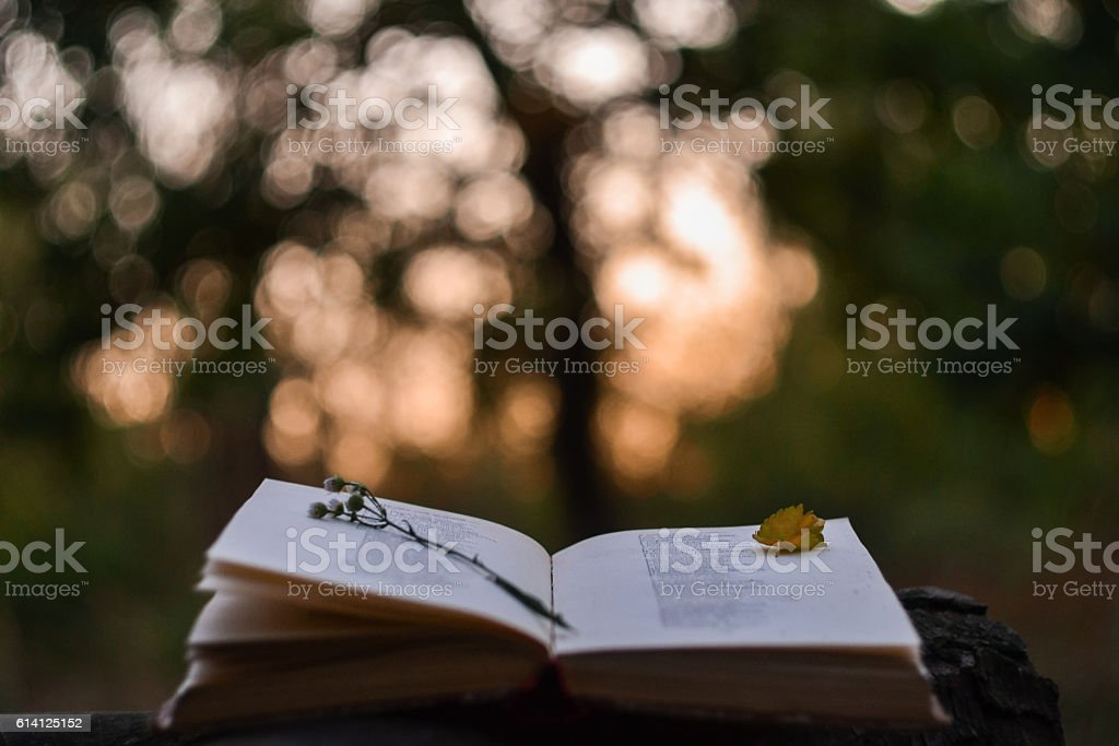 Poetry book at sunset stock photo
