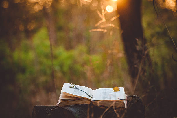 Poetry book under tree picture id588356346?b=1&k=6&m=588356346&s=612x612&w=0&h=5 mnu2tml4edx9rzhs7dpi69g61ng1mhanmbmp9rad0=