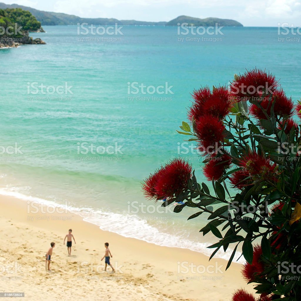 Pohutakawa and Seascape, Abel Tasman National Park, NZ stock photo